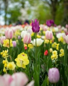 Pflanztisch Blumen